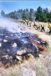 Inmate crews work the Battle Creek Fire in August 2002.