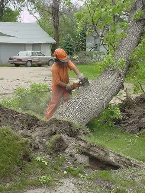 Inmates remove fallen trees following a storm in Cresbard.