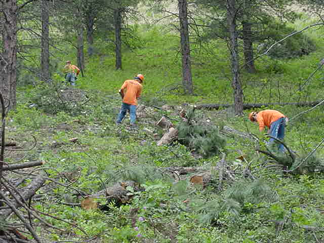Inmates thining dead trees to prevent forest fires.