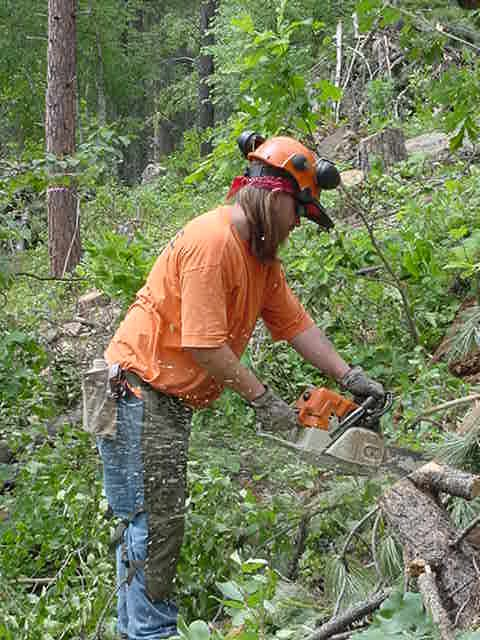 Inmate thining dead trees to prevent forest fires.